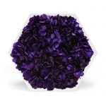 element6full-hortensia-violet-web