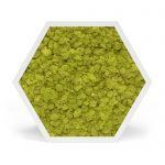 element6full-lichen-lime-web